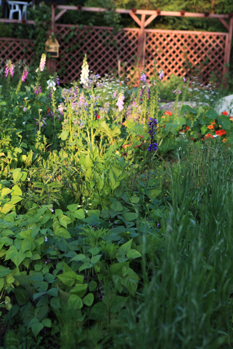 ogrod-warzywny