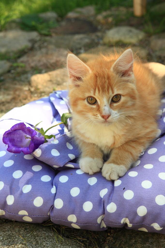 rudy-kotek