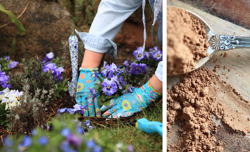 ogród-i-kakao