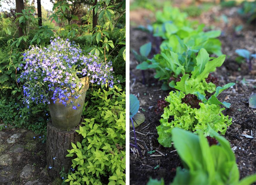 maj-w-ogrodzie