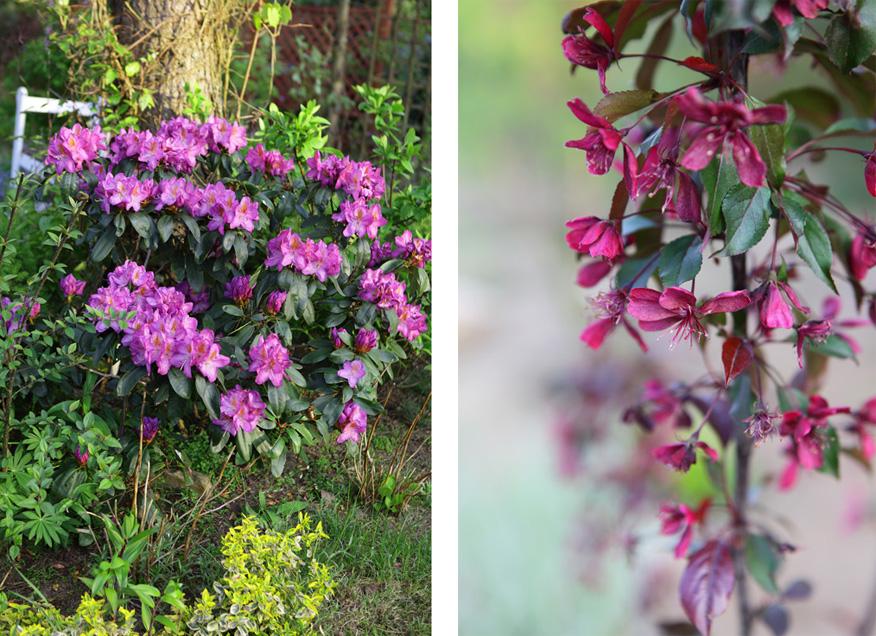 majowe- kwiaty
