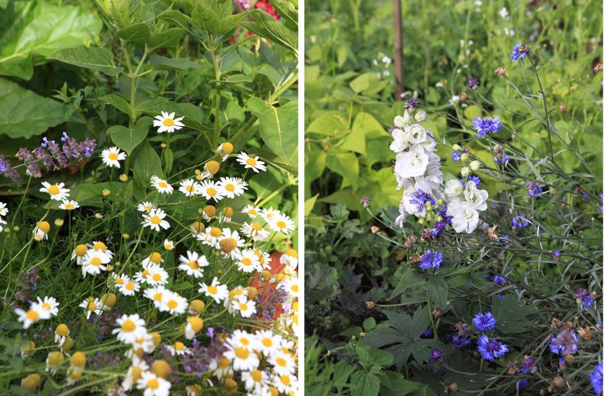 kwiaty w warzywniaku
