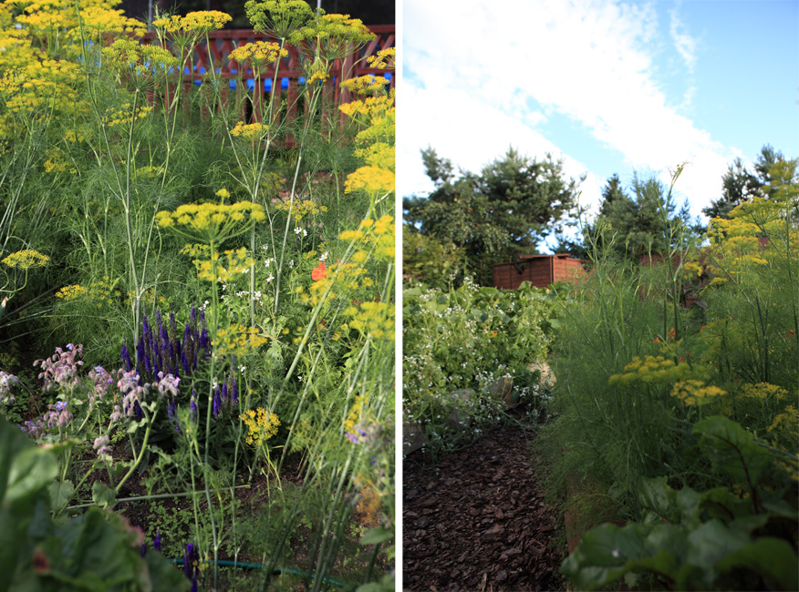 jak założyć ogród warzywny