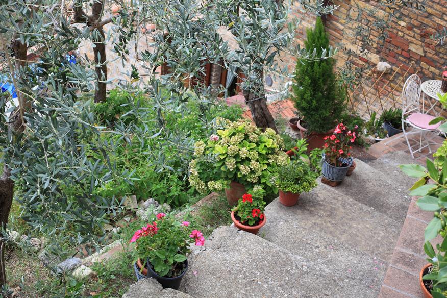 Schody w roślinach.