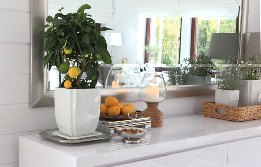 uprawiamy-cytryny-w-domu