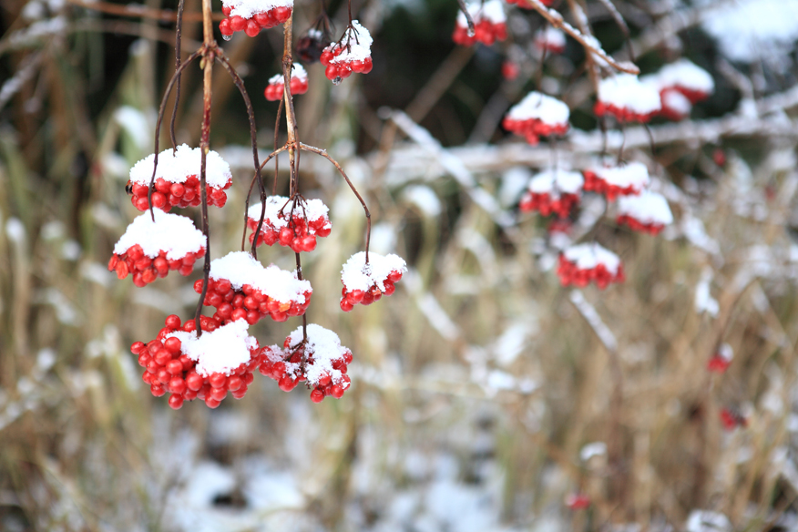 ogrod-zimowy-greencanoe
