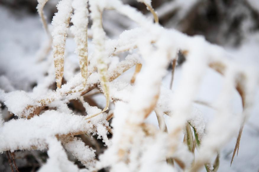 zimowe-klimaty