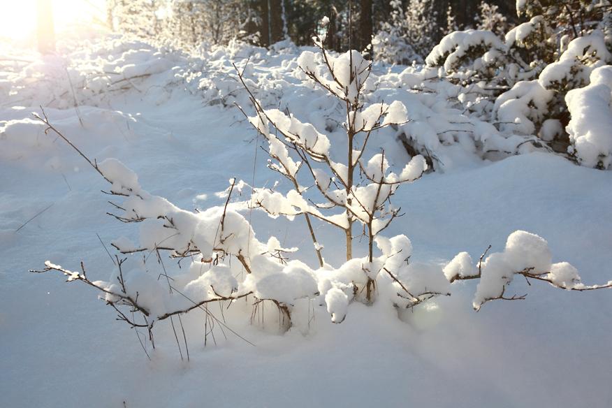 zimowy-ogrod-green-canoe