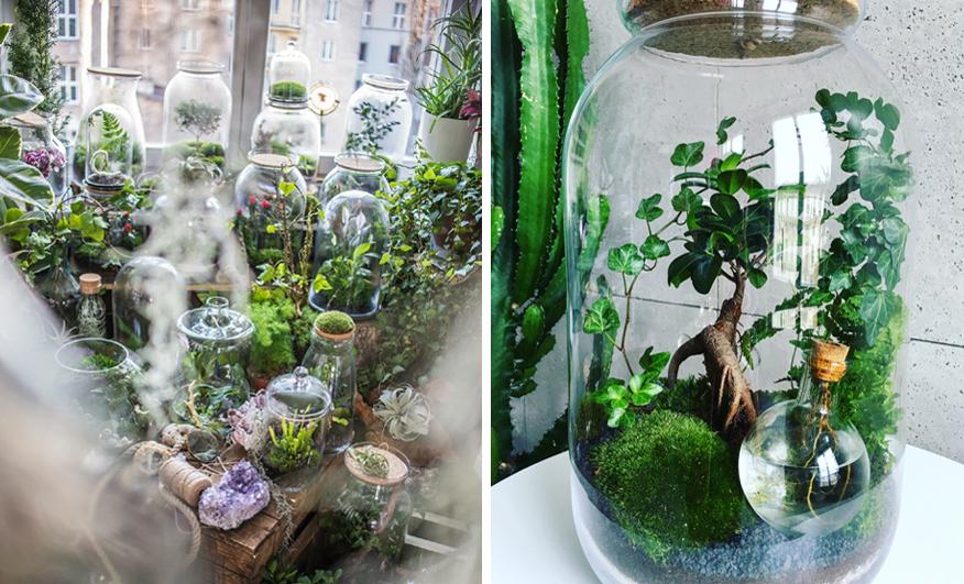 ogrod w butelce