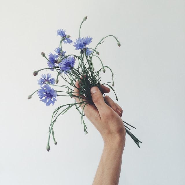 roślinne porady