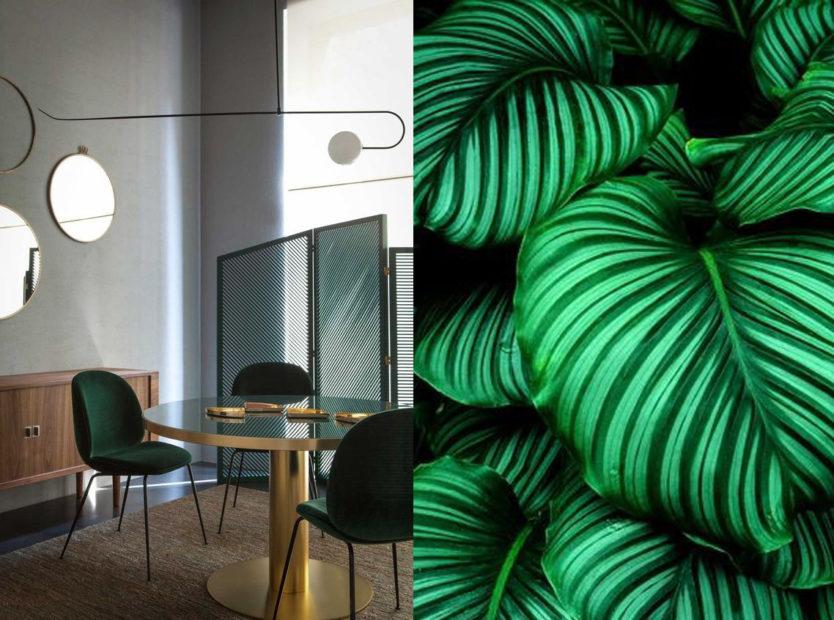 zieleń we wnętrzach