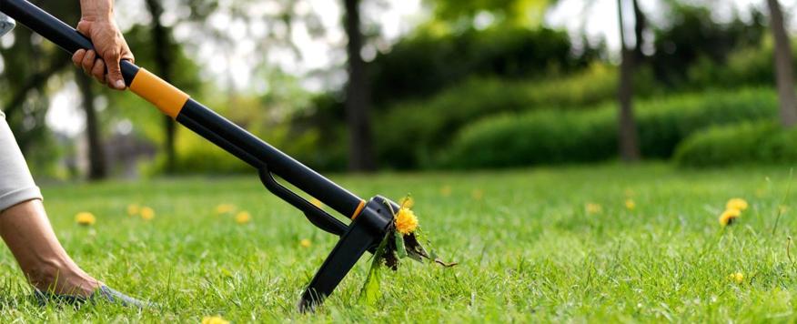 Jak dbać o trawnik narzędzia których będziemy potrzebować