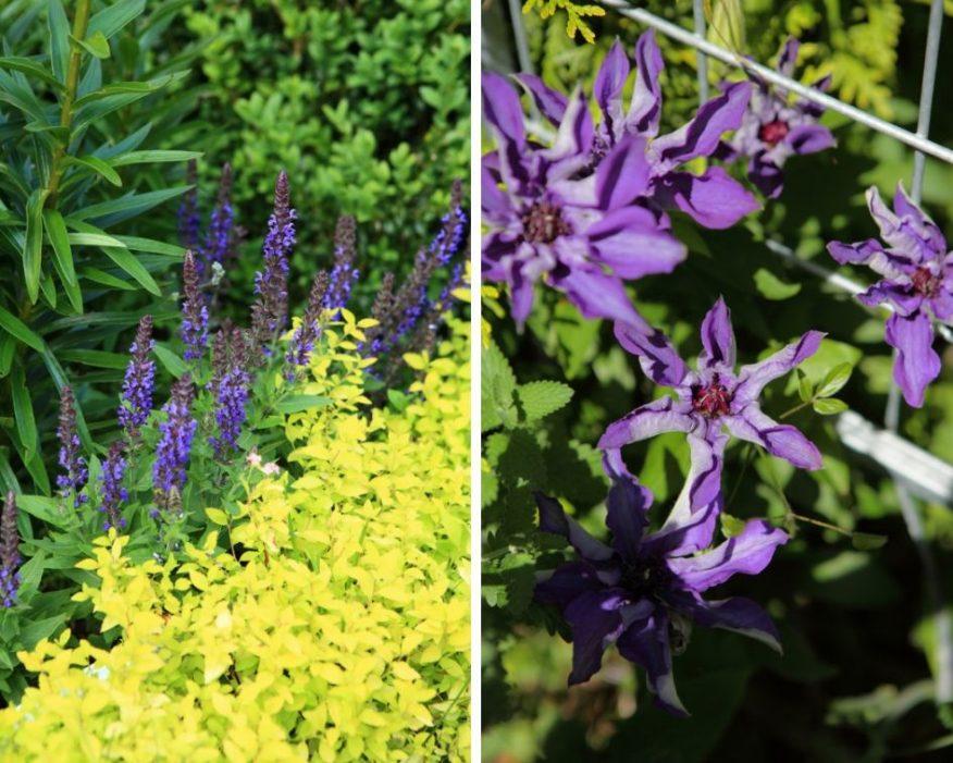 kolory w ogrodzie GREEN CANOE