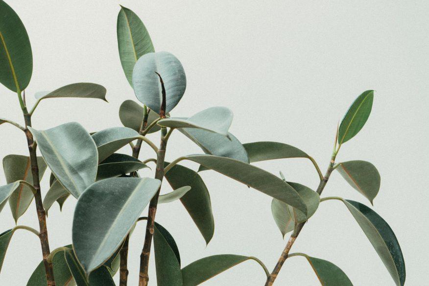 rozmnażanie roślin GREEN CANOE