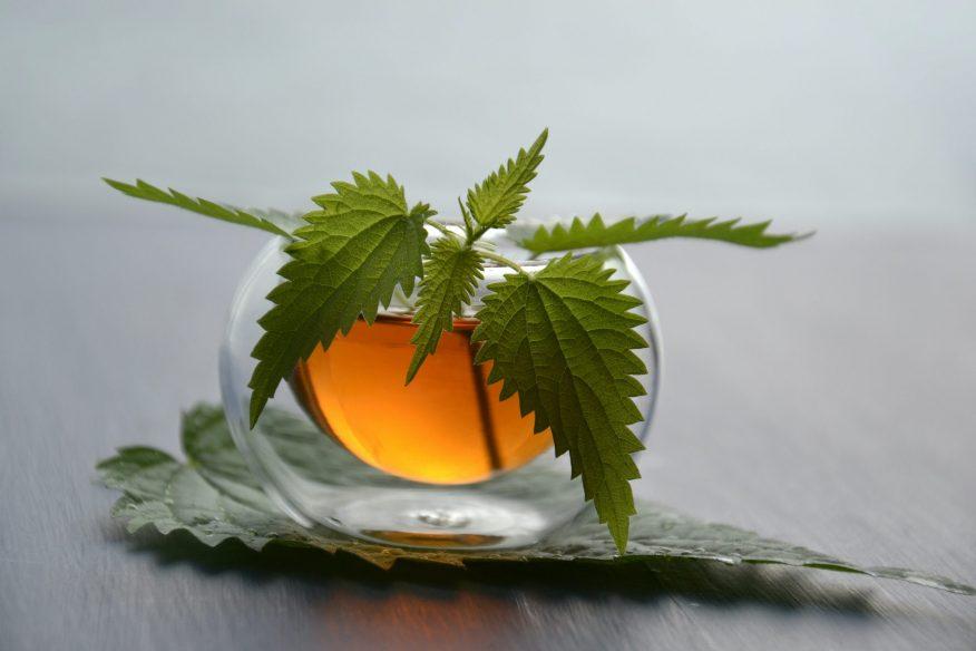 herbata z pokrzywy przepisy GREEN CANOE